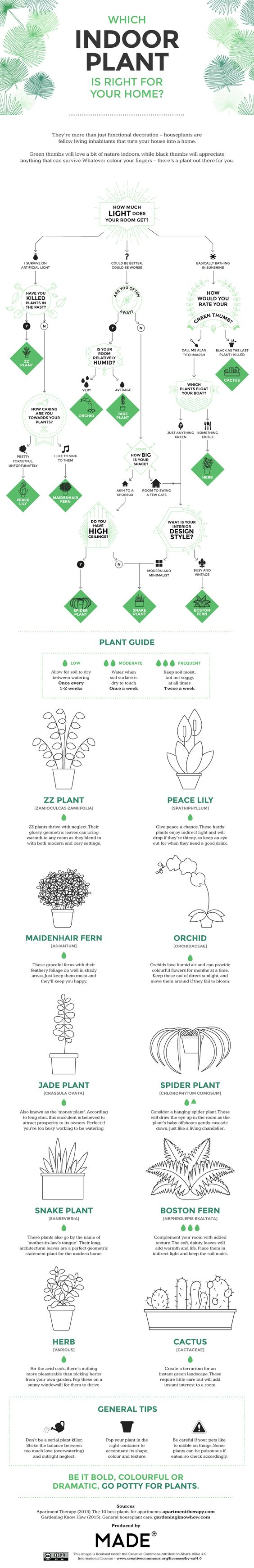 Which Indoor Plant is Right for Your Home Infographic